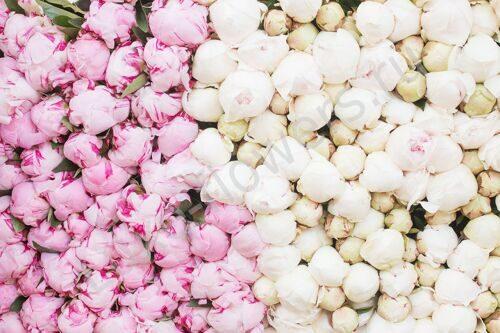 Купить синие цветы в москве оптом, доставка цветов кипр айанапа
